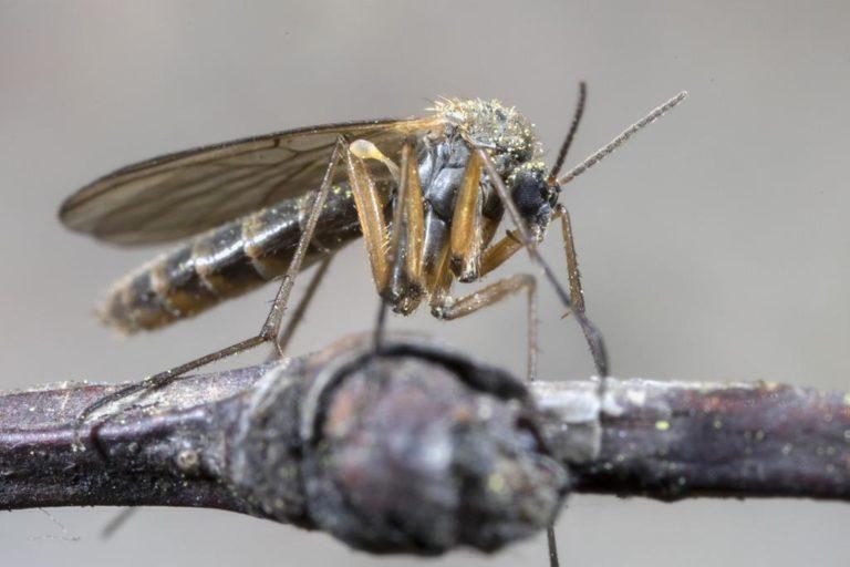 Czy nie za wiele kąśliwych owadów lata po twoim domu?